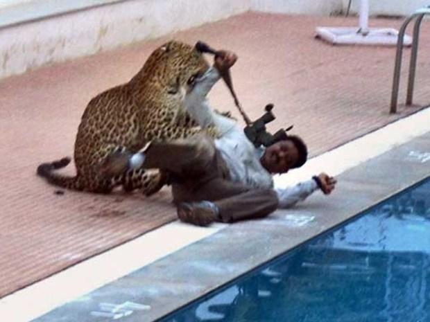 leopard_went_to_school__main