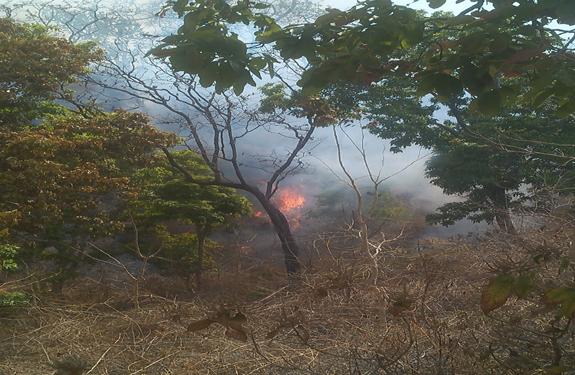 Madhya Pradesh, Dindori, forest fire