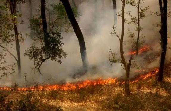 Burning uttarakhand-forest-fire