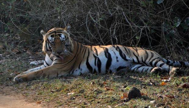 Bad ,undergoing, Tiger ,Munna