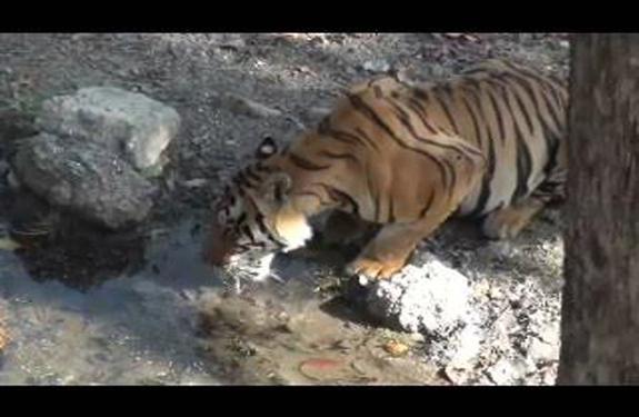Kanha National Park Madhya Pradesh Kanha Tiger Reserve photo