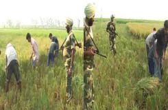 बॉर्डर पर किसानों की सुरक्षा के साथ फसल भी कटवा रहे आर्मी जवान