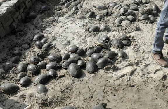amethi-tortoise-smuggling-news-in-hindi