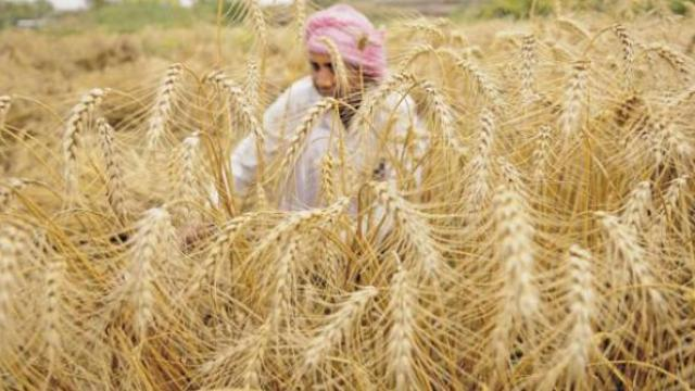 Find a big gift from farmers on behalf of PM MODI