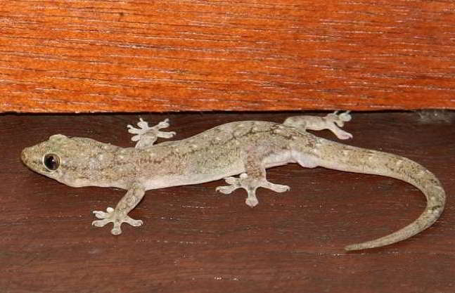 removal-of-lizards-from-home-in-hindi-1