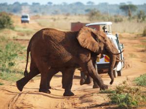 Активный отдых в Африке