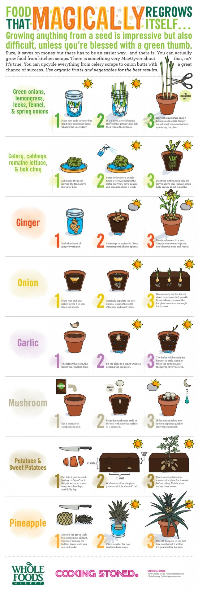 Cool Life Hack: Food That Regrows Itself