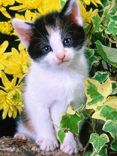 Красивые картинки кошки на мобильный телефон. Скачать ...