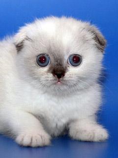 Красивые картинки кошек и котят на мобильный телефон ...