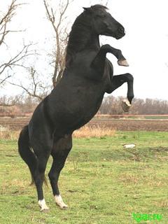 Красивые картинки лошадей на мобильный телефон. Скачать ...
