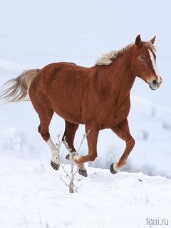 Красивые картинки лошадей на мобильный телефон. Обои ...