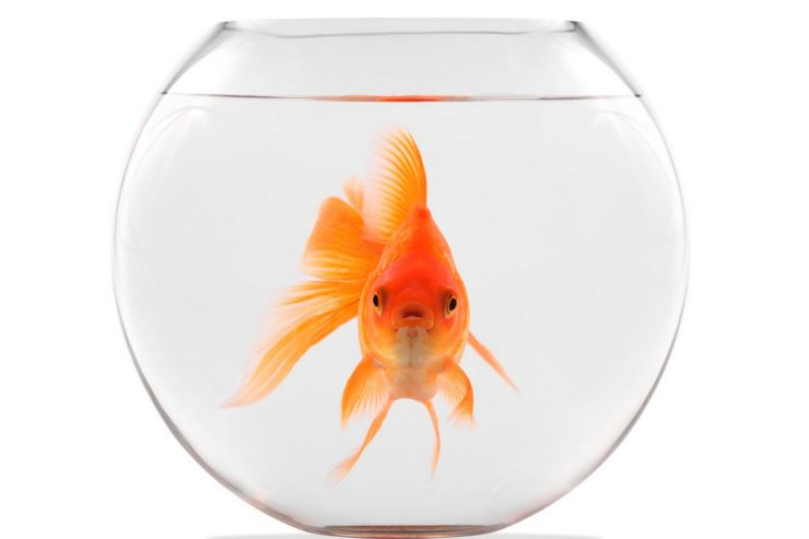 The Lone Goldfish Theory: Humanity completely alone and adrift in the universe as an intelligent civilization