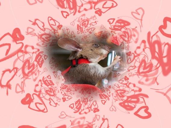 HeroRat Valentine Feature