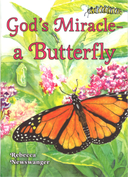 God's Miracle- a Butterfly