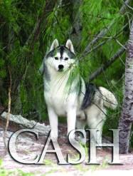 Imagem capa Cash Winners Dog