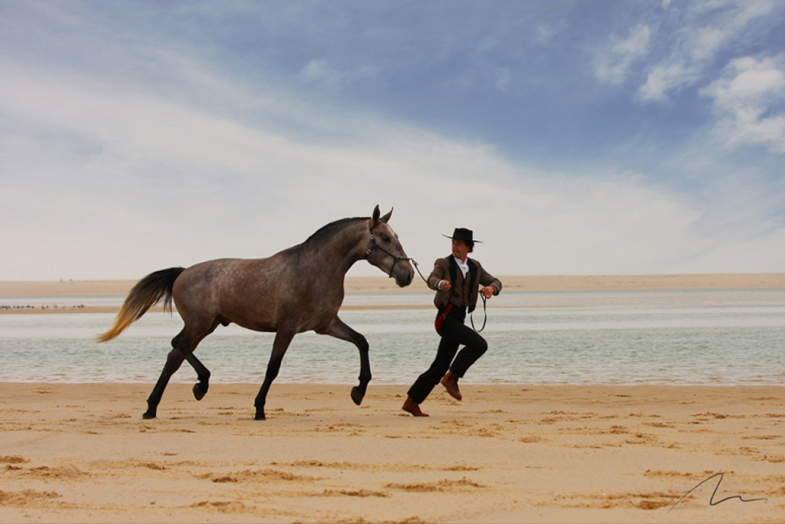 Foto cavalos