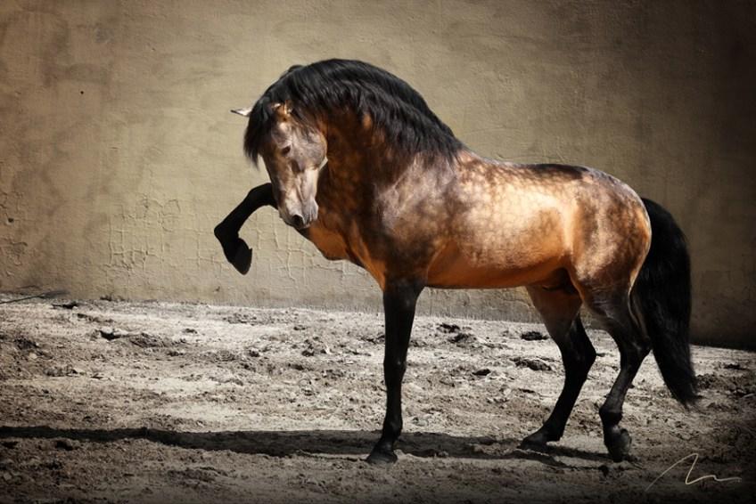 Foto cavalo se apresentando.