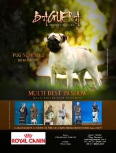 Arte para revista raça Pug
