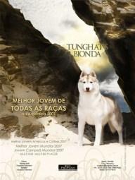 imagem propaganda melhor jovem cão do brasil entre todas as raças