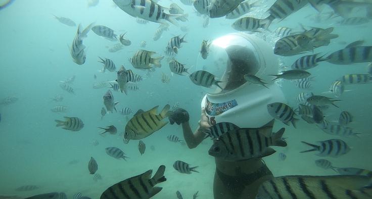 เจอฝูงปลาให้ทะเลมากมาย