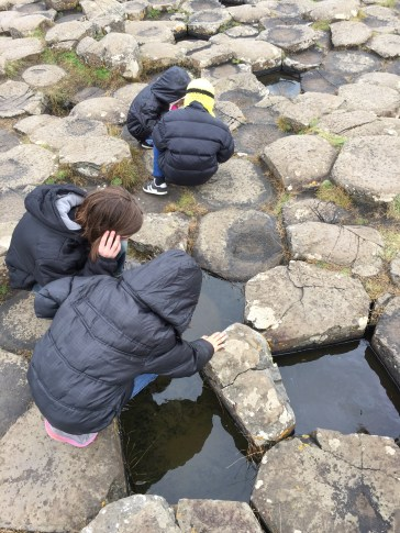 They were hunting for live things in the rock pools.