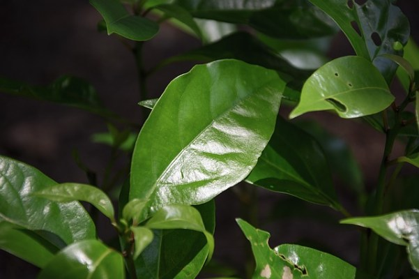 Camphor is usually one of the main ingredients of balm