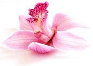 Bild einer Orchidee