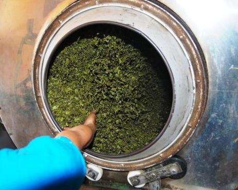 Tee-Blätter in rotierendem Heizkessel in Doi Mae Salong, Thailand