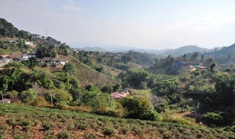 Doi Mae Salong: Aussicht von Khum Nai Pol Resort über Tee-Plantage und Stadt