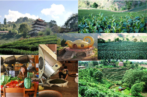 Tee-Anbau in Nordthailand: Siam Tee Collage