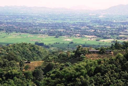 Tee-Garten mit Panorama in Ban Sie Phan Rai auf dem Doi Tung, Nordthailand