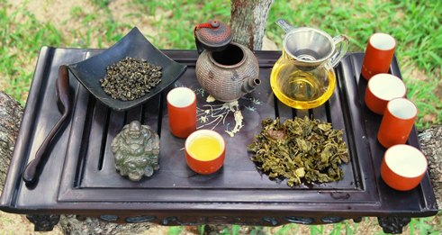 Jin Xuan Taiwan Oolong Kultivar Nr. 12: Gong Fu Cha in meinem Garten