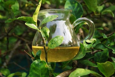 Grüner Tee Guan Yin in einem Baum in meinem Garten