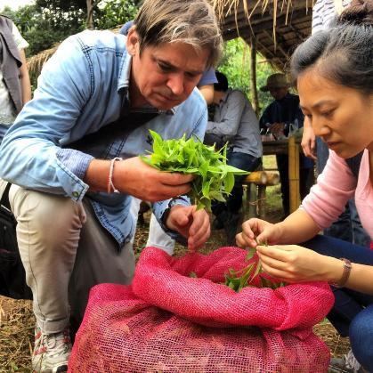 Begutachtung frisch geernteter Teeblätter in Doi Mae Salong, Nordthailand
