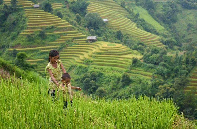 Teegarten-Szenerie in Ha Giang, Vietnam, Heimat von Vietnams feinsten Arbor-Tees