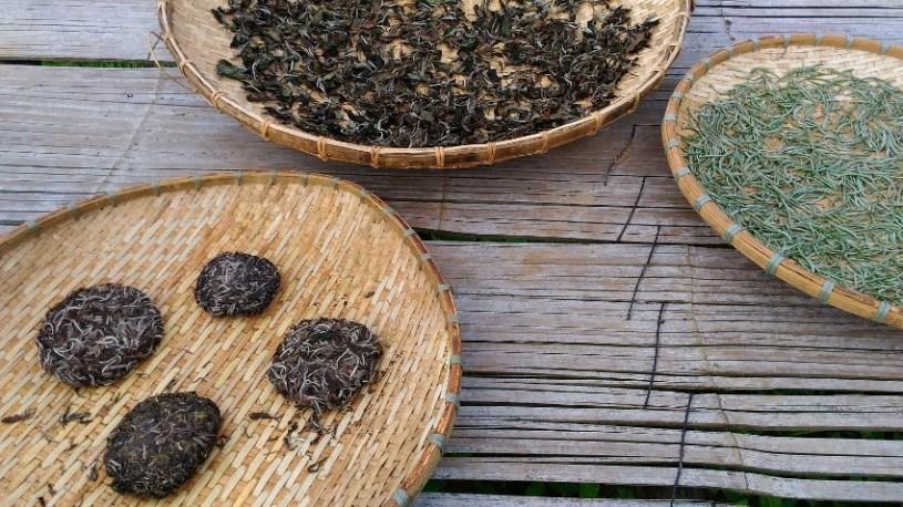 Teeblätter von nativen Teebäumen beim Trocknen, Bolaven Plateau, Laos