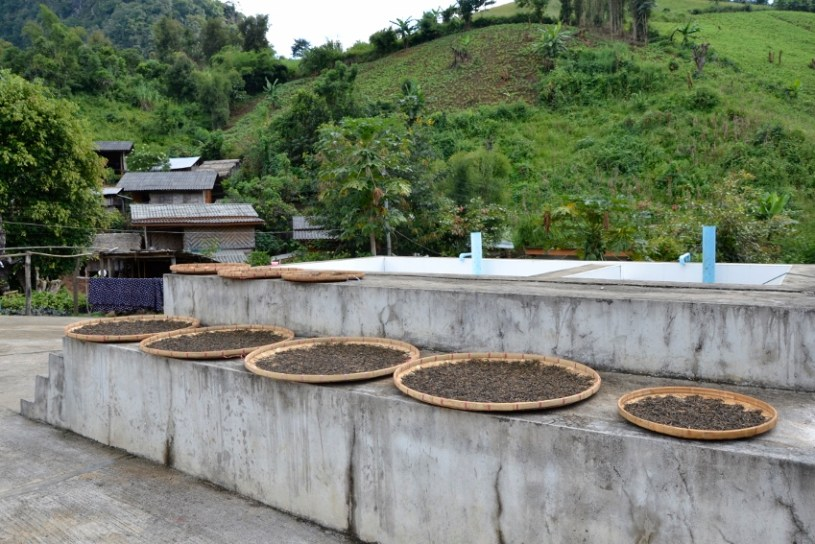 visible signs of tea processing
