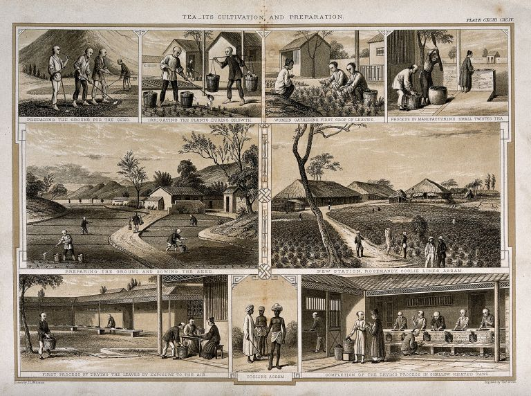 eeanbau in Assam im 19. Jahrhundert