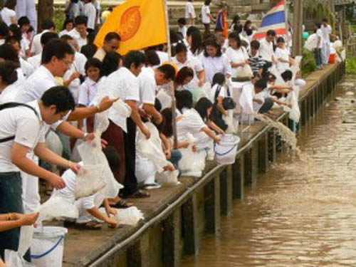 Mass freeing of animals as a Ceremonial and Cultural tradition for Making Merit as a Buddhist.
