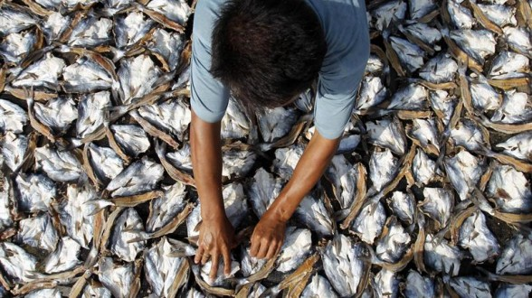 Today, consumers, commonly lack basic information on fish sources