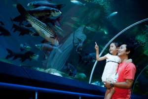 Underwater world pattaya thumbnail