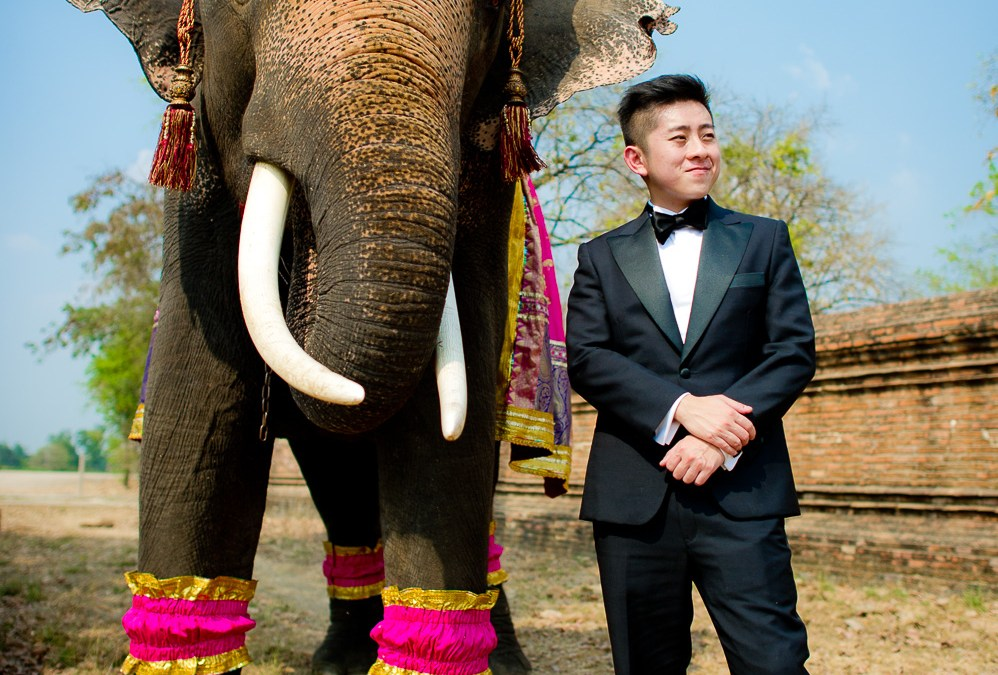 Preview: Pre-Wedding with elephant in Ayutthaya Thailand