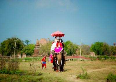 Ayutthaya Elephant Village