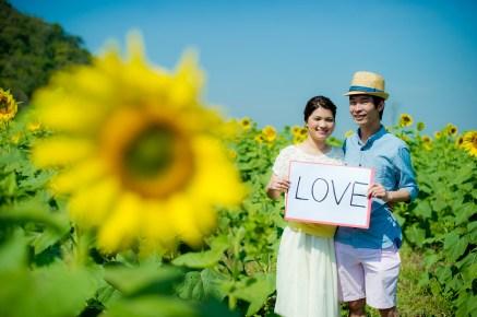 Sunflower Pre-Wedding   Thailand Saraburi Pre-Wedding Photography