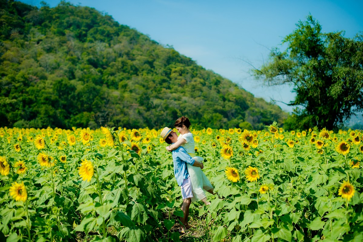Photo of the Day: Pre-Wedding with Sunflowers in Saraburi