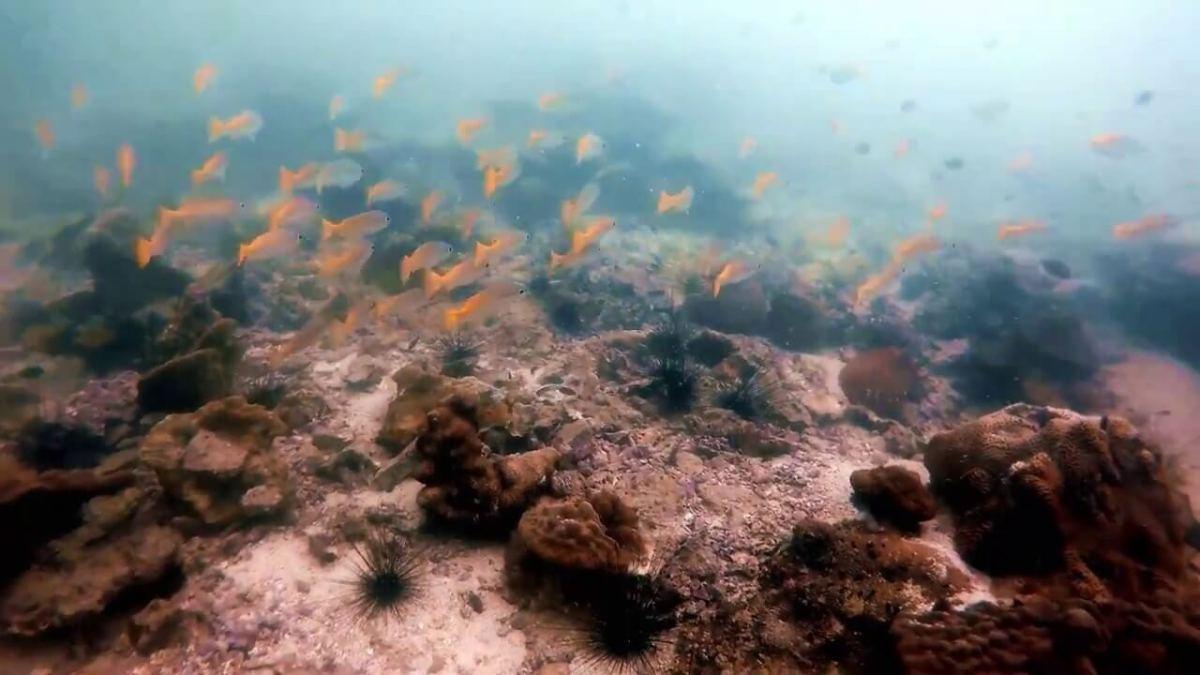 Scuba Diving in Pattaya - Thai Scuba Diving
