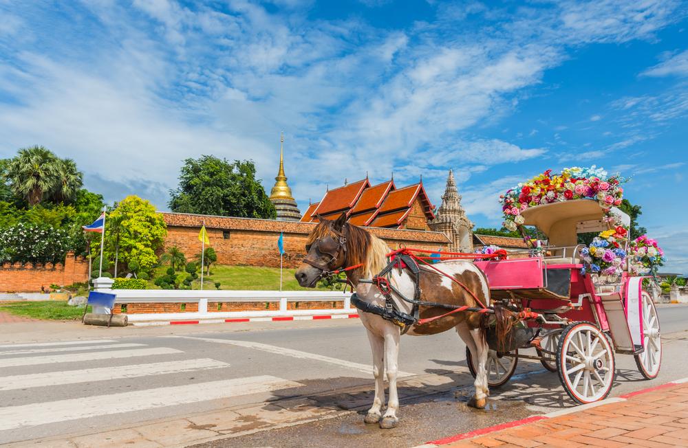 รถม้า (The Horse Drawn Carriage)