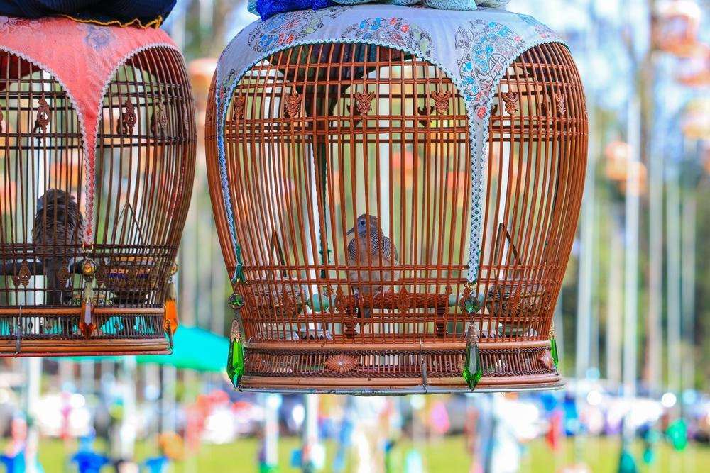 ASEAN Ground Barred Dove Competition (งานแข่งขันนกเขาชวาเสียงอาเซียน)