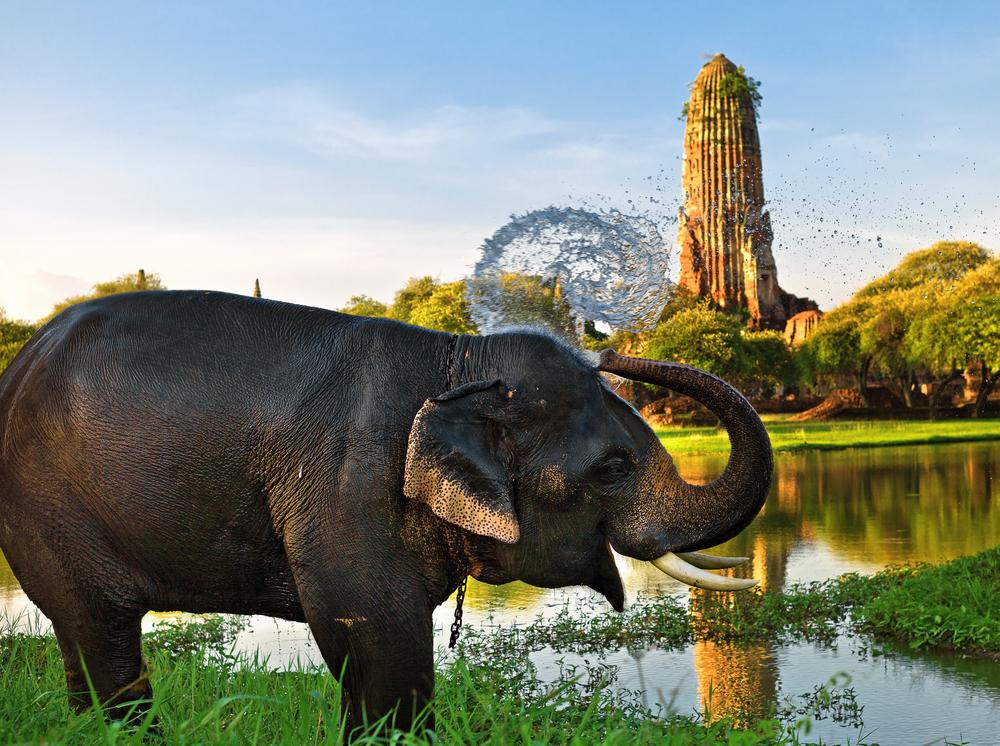 Elephantstay (โฮมสเตย์ช้าง)