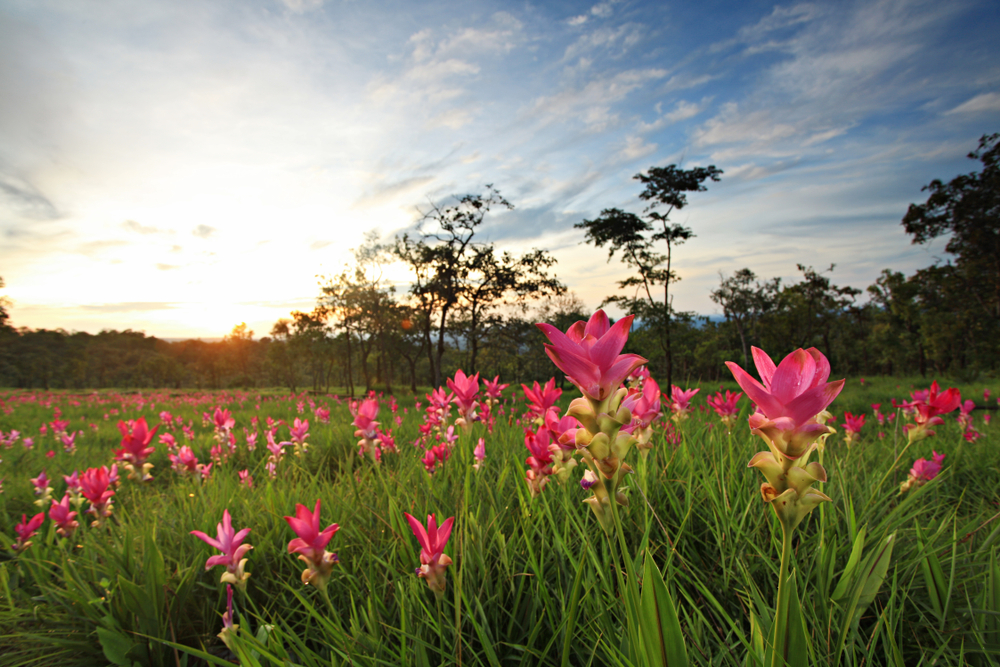 Chaiyaphum – The Province of National Parks in Thailand
